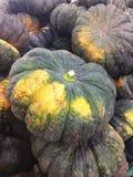 Green pumpkins background Stock Images