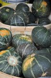 Green pumpkins in baskets. A lot of green pumpkins on street market Royalty Free Stock Image