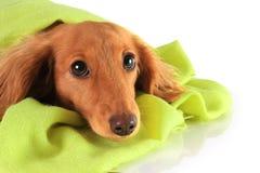 Green puppy Stock Photo