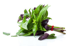 The Green and Purple Basil Stock Photos