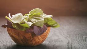 Green and purple basil leaves in wood bowl on wooden table Stock Photos
