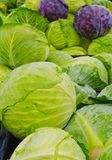 Green and purple cabbages heads at farmers market Royalty Free Stock Photo