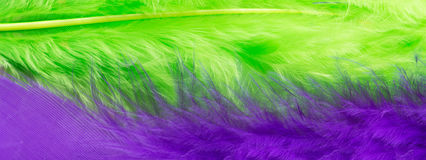 Green and purple feather background, close up Stock Photo
