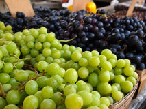 Green and Purple Grape Bunches Royalty Free Stock Photo