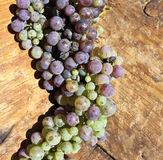 Green and purple grapes Royalty Free Stock Images