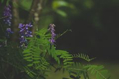 Green and Purple Leafed Plant Stock Image