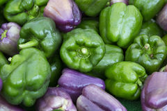 Green and purple peppers Stock Photography