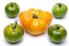 Green and purple tomatoes. On white Royalty Free Stock Photos
