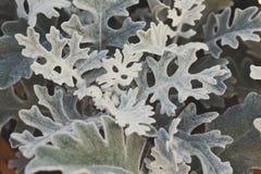 Green purslane summer background, copy space. Portulaca oleracea. Garden plant, beautiful flowerbed decoration Stock Photo