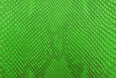 Green python snack skin texture background. royalty free stock photography