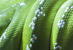 Green python snake skin Royalty Free Stock Image