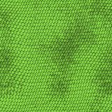 Green python snake skin texture background. Stock Image