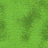 Green python snake skin texture background. royalty free illustration
