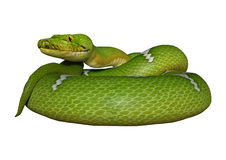 Green Python on White Royalty Free Stock Image