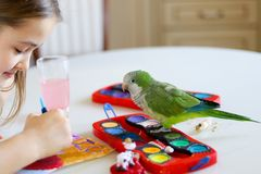 The green quaker parrot is posing on paints for a little girl stock image