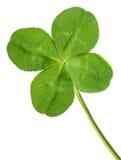 Green quarter-foil Stock Photo