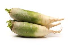 Green radish Royalty Free Stock Images