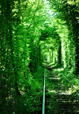 Green railway tunell. Natural Tree Arc named Love tunell Stock Photos