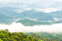 Green rain forest on mountain with mist and low cloud in morning. Royalty Free Stock Photos