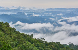 Green rain forest on mountain in the morning. Mist and low cloud between mountains. Royalty Free Stock Photos