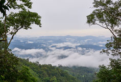 Green rain forest on mountain in the morning. Mist and low cloud between mountains. Royalty Free Stock Photo
