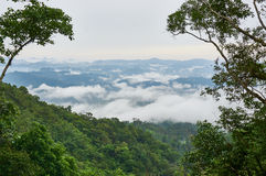 Green rain forest on mountain in the morning. Mist and low cloud between mountains. Royalty Free Stock Images