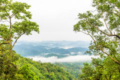 Green rain forest on mountian with mist and low cloud in morning Stock Image