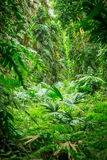 Green rain forest Royalty Free Stock Image