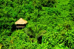 Green rain forest tropical jungle and romantic hut view adventure in East Asia stock image