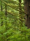 Green Rainforest Royalty Free Stock Photo