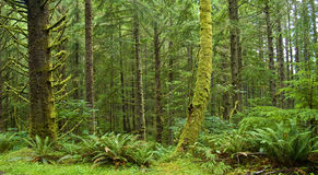 Green Rainforest Royalty Free Stock Photo