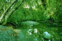 Green Rainforest Background. In New Zealand wilderness royalty free stock photo