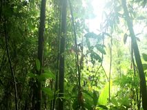 Green rainforest. Backlit sunlight. Royalty Free Stock Photography