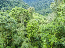 Green rainforest jungle area Stock Photography