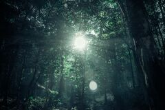 Green Rainforest Under Sunny Day Royalty Free Stock Photo