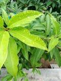 Green. Rainy day nice climate Royalty Free Stock Photo