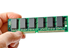 Green RAM Royalty Free Stock Image