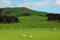 The green ranch. In New Zealand Stock Image
