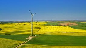 Green rape fields and wind turbine in the spring, Poland stock video footage