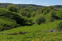 Green ravine in Sweden stock images