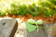 Green raw ginkgos and leaves on a wooden table. In the image, there are some green ginkgos and leaves on a wooden table Royalty Free Stock Photography