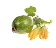 Green raw  pumpkin Royalty Free Stock Photo