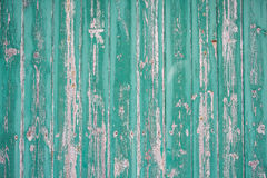 Green Real Wood Texture Background. Vintage and Old. Green Wood Texture Background. Vintage and Old. Close-up picture of wood wall. The wall is old and with Royalty Free Stock Photos