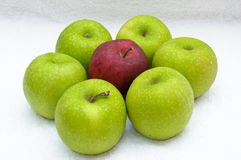 Green & red apple Stock Images