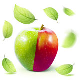 Green red Apple and leafe isolated with clipping path Royalty Free Stock Photos