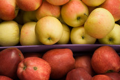 Green and red apples Royalty Free Stock Images