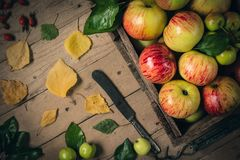 Green and red apples on rustic  table. toned photo Royalty Free Stock Images