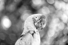 Green and red ara parrot outdoor Royalty Free Stock Photos