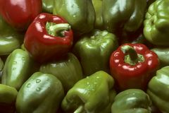 Green and red Bell peppers. Filling the frame Royalty Free Stock Photo