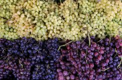 Green, red, black grapes in the greek vegetable shop. Variety of grapes 3 sorts green, red Moscato, golden black on the counter in the greek vegetable shop Stock Images
